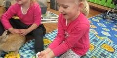 Berušky - Zvířátka ve školce