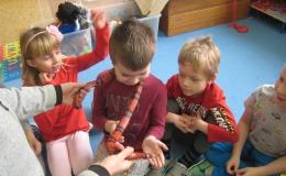 Žabičky -  ukázka plazů
